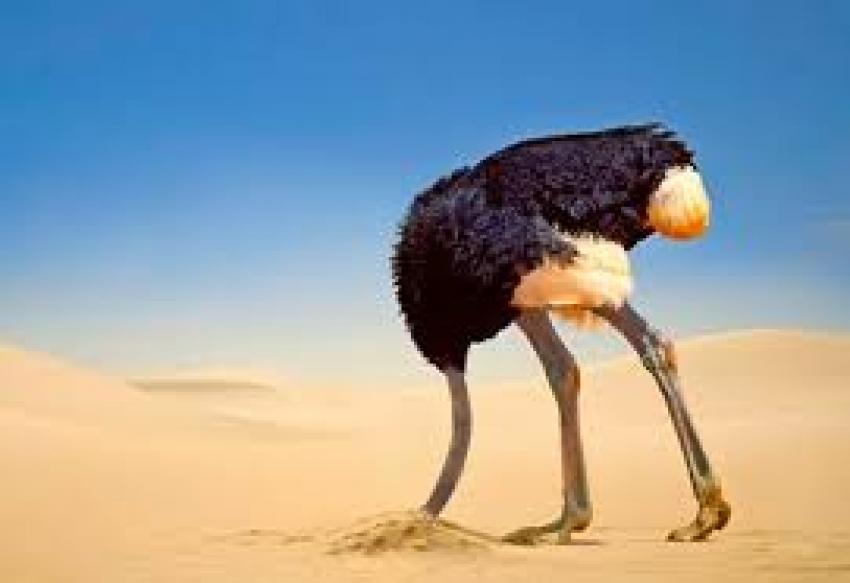 Vogelstrausspolitik?  Übernehmen Sie doch endlich Verantwortung!